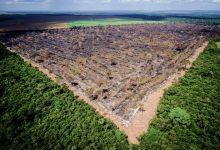 Photo of Greenpeace acusa duas multinacionais americanas de cumplicidade no desmatamento no Brasil