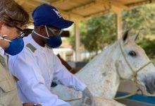 Photo of Soros produzidos por cavalos têm anticorpos para a covid-19