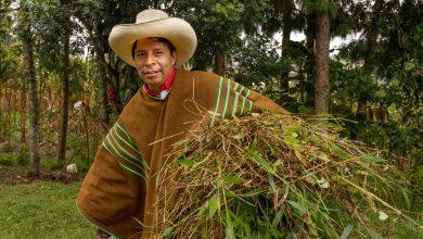 Photo of ELEIÇÕES PERU 2021- Pedro Castillo, o professor rural que quer levar a esquerda de volta ao poder no Peru